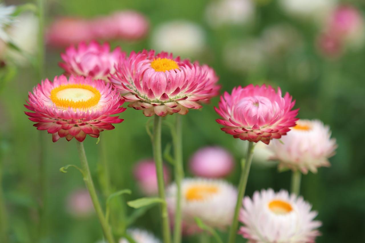flores no verão
