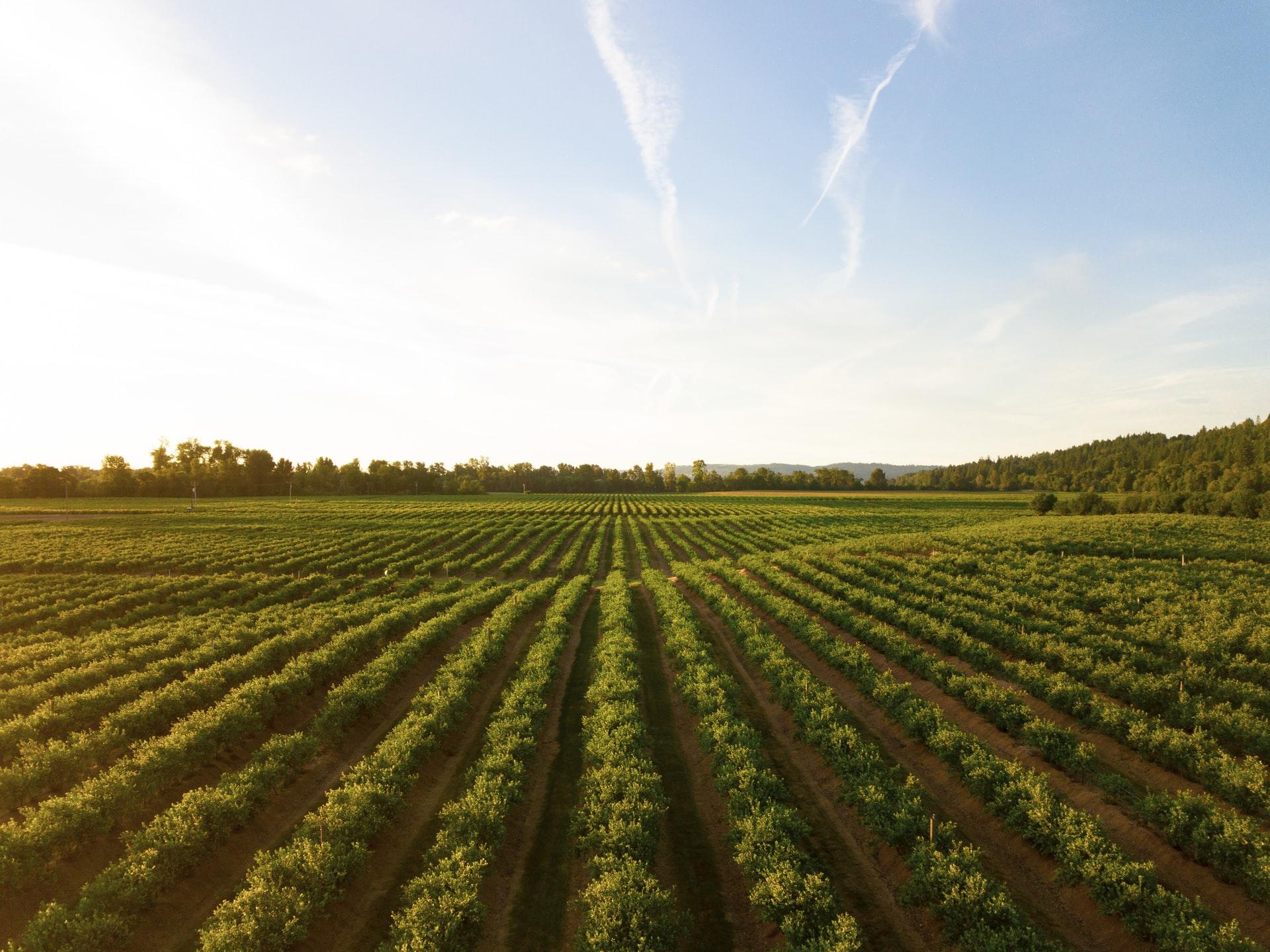 Quintas e terrenos aumentam procura