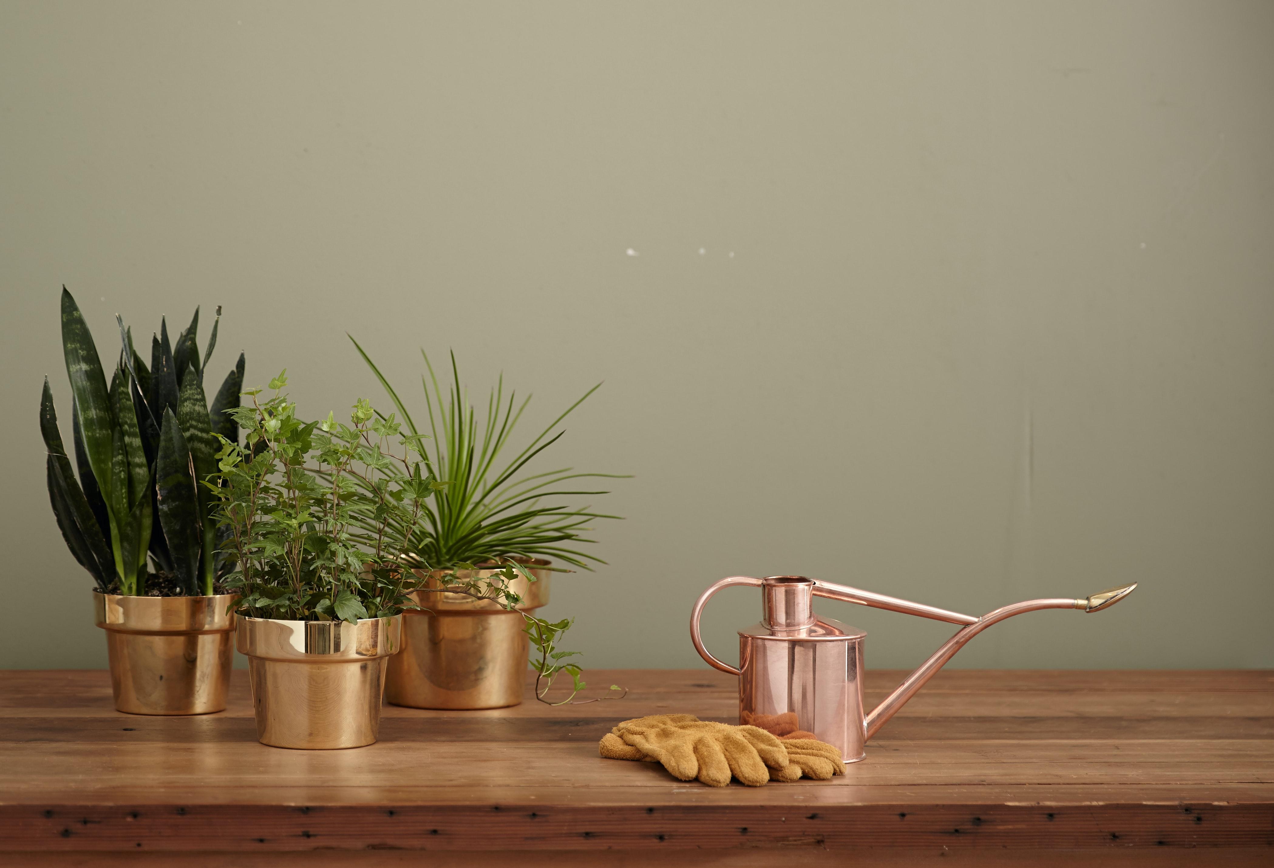 Dicas para cuidar das plantas no verão