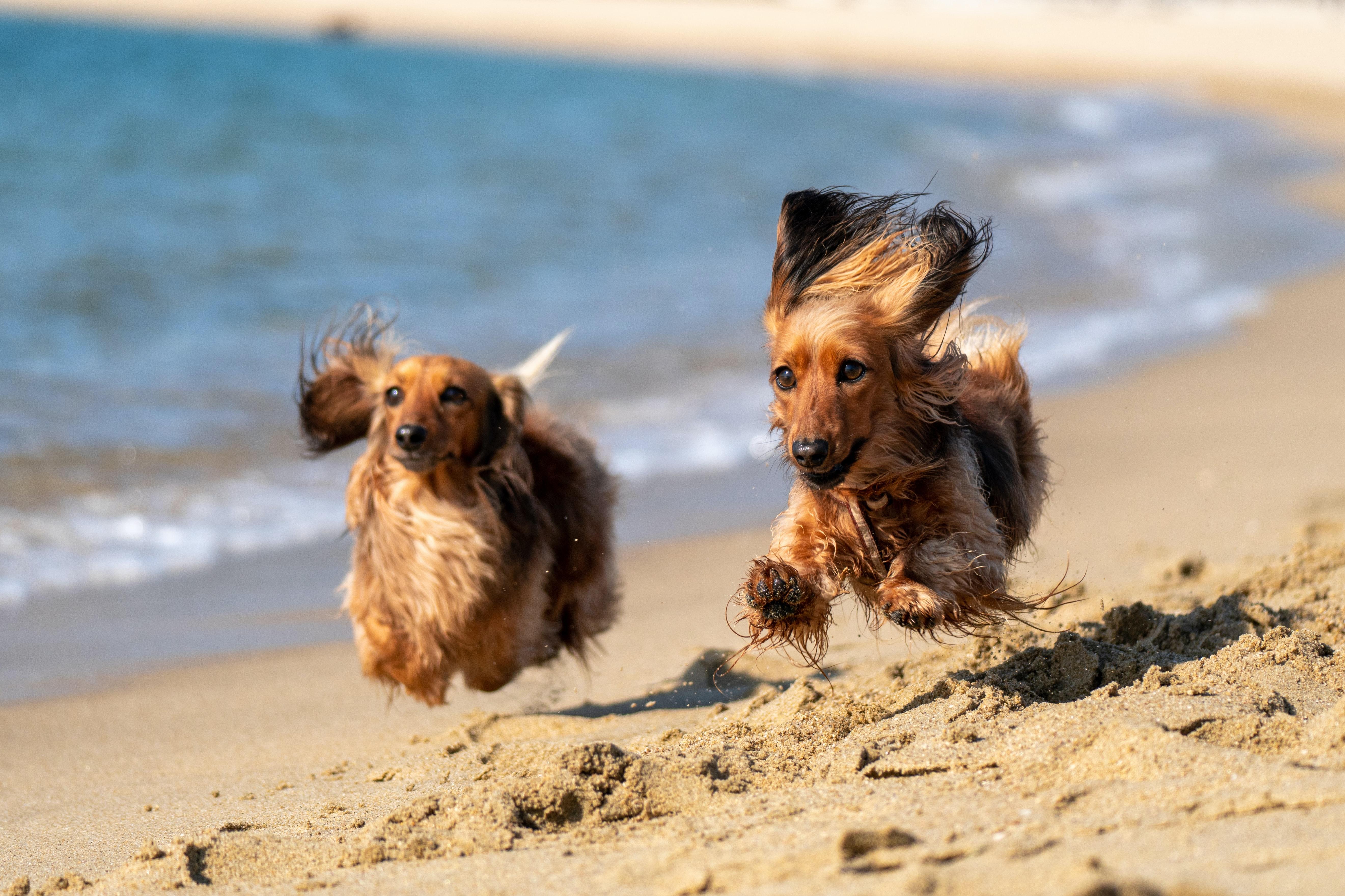 Praias que aceitam animais de estimação