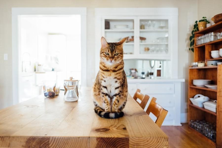Como preparar a casa para ter um gato