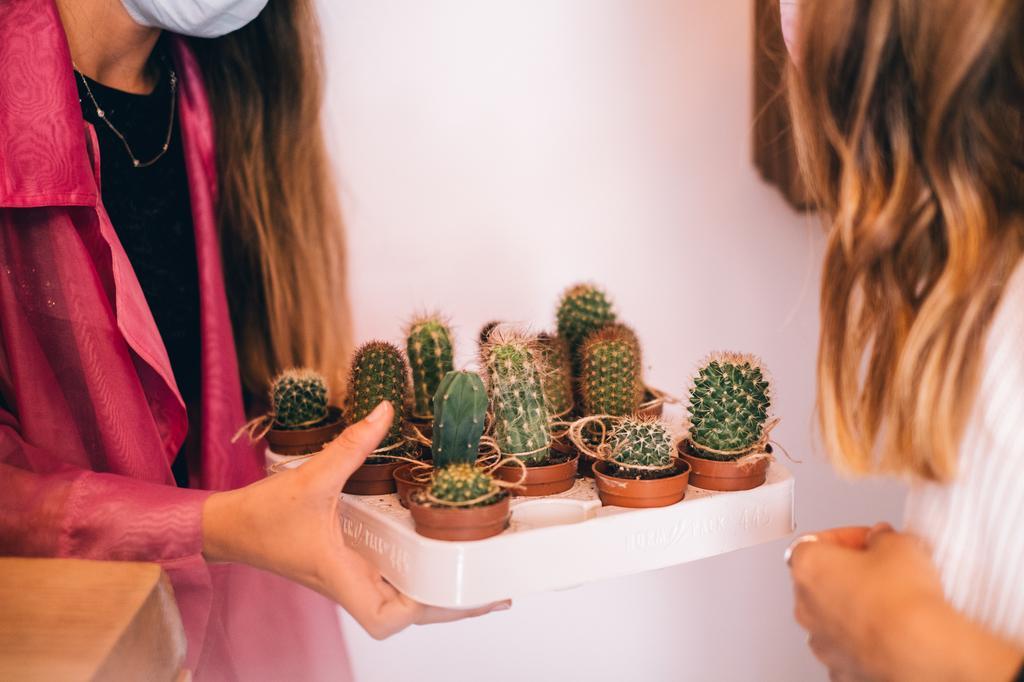 Cuidar das plantas tem vários benefícios