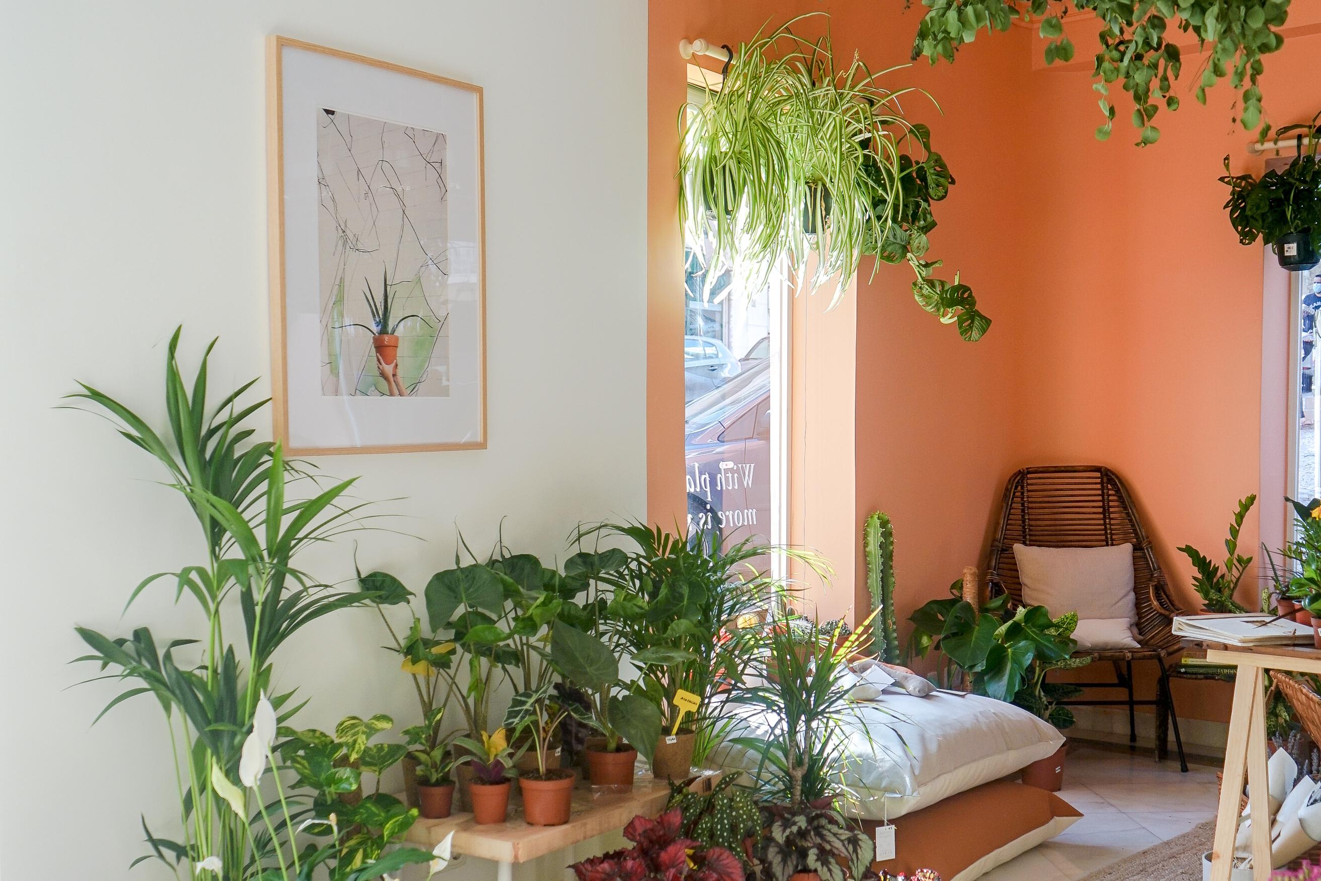 Criar um santuário de plantas em casa