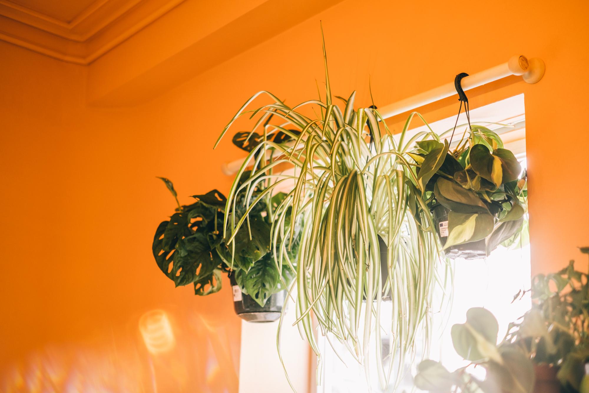 6 plantas perfeitas para ter no quarto e melhorar o sono