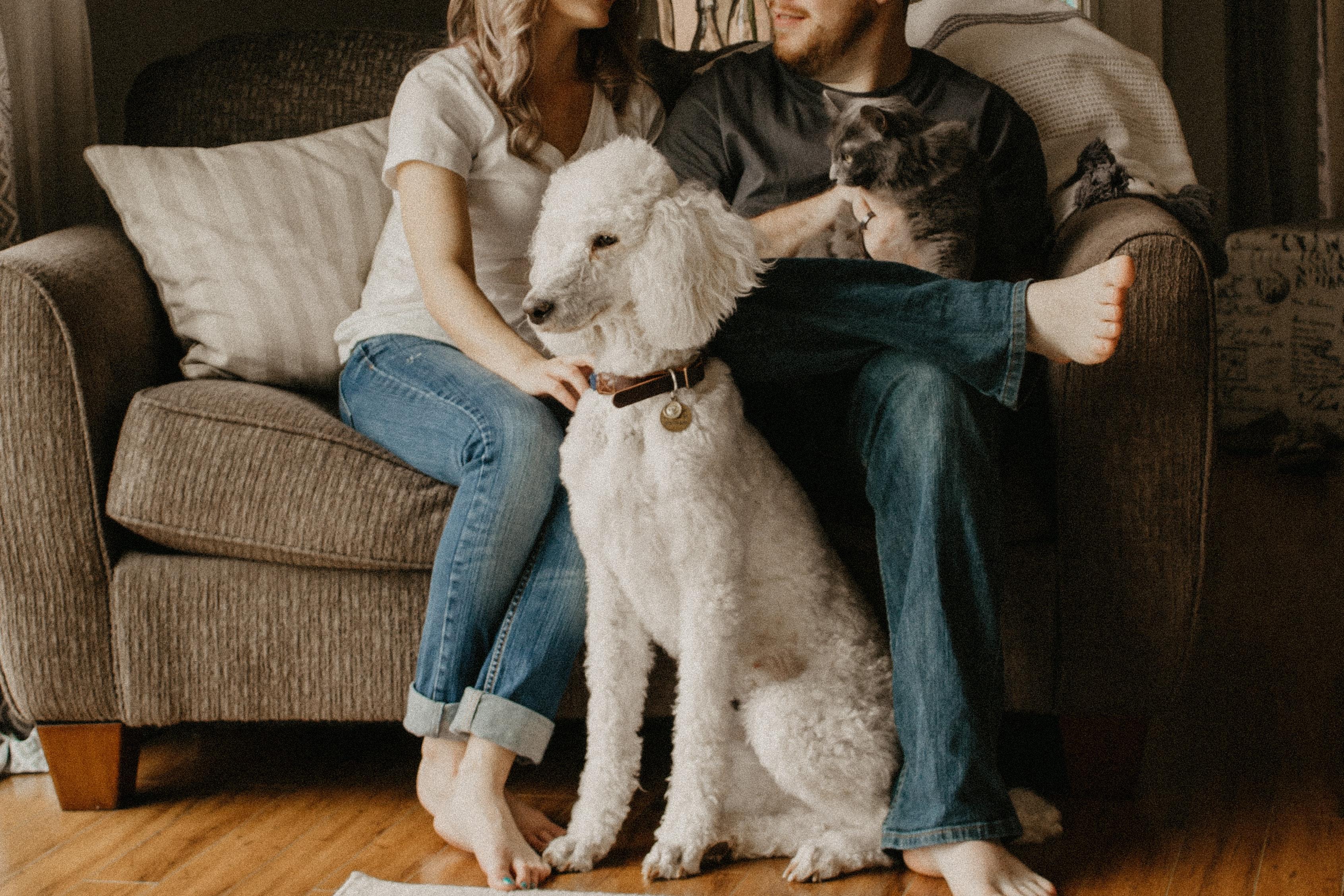 Manter a casa limpa tendo animais de estimação