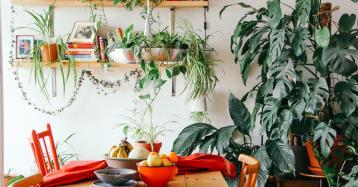 Ideias de decoração: dicas para criar um jardim interior em casa