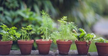 Ter a própria horta em casa? Ideias simples e infalíveis
