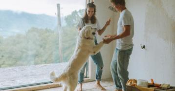 Direitos dos animais de estimação: no divórcio tratados como filhos, em Espanha