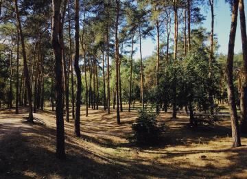 """Governo prevê """"renda justa"""" no arrendamento forçado de propriedades florestais"""