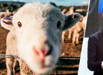 Ronaldo muda de casa em Manchester por culpa de ovelhas ruidosas