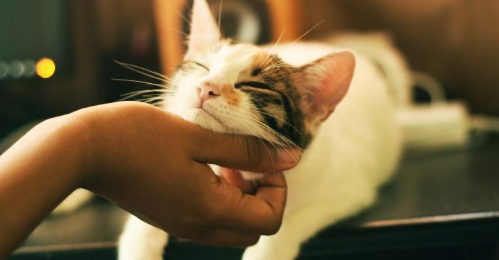 Tens animais de estimação? As regras para poderem viver num condomínio
