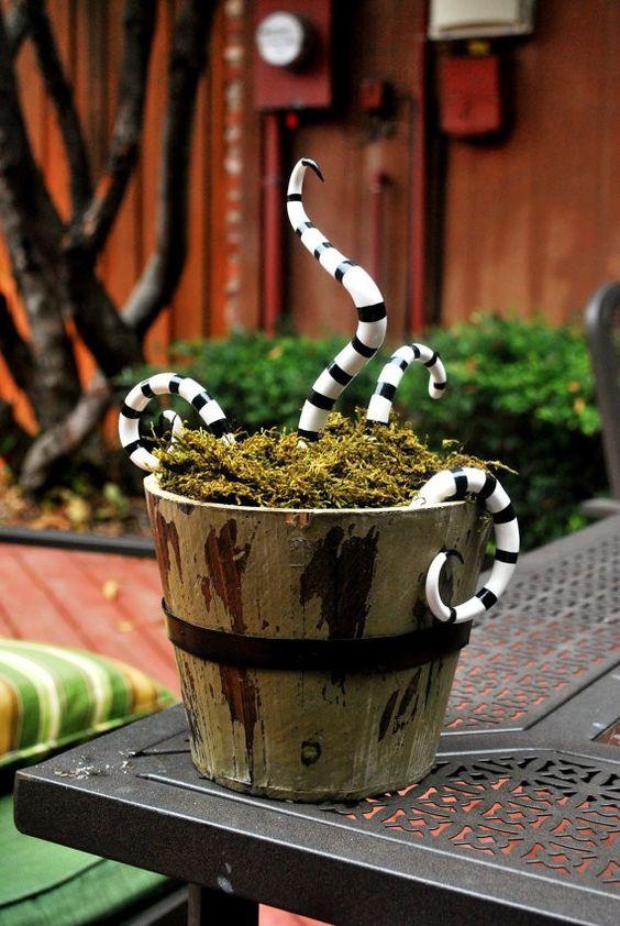 Plantas com serpentes