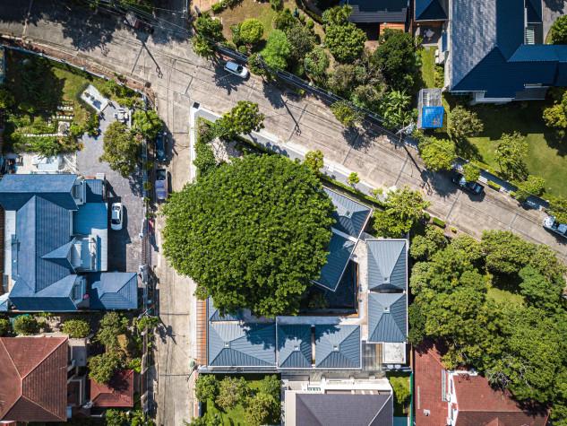 Destaca-se a grande dimensão da árvores
