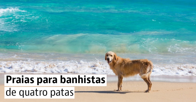 4 destinos de praia para cães em Portugal