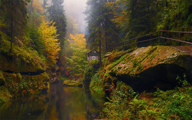 Perdida no meio do bosque