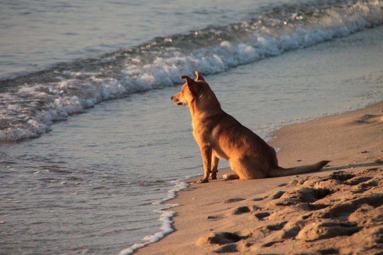 Praia da Ramalha Sul em Esposende