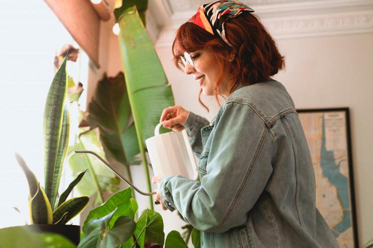 Cuidar das plantas no verão